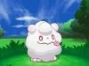 pokemon_xy-8-1