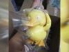 BurgerKing-KidsMeal-DetectivePikachu-Toy-7