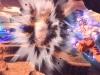 goku-ultra-instinct-dragon-ball-xenoverse-2-9-1