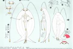 pokemon-sun-moon-ultra-beasts-ca-3