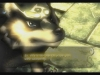137046_WiiU_ZeldaTP_PRScreenshots_MeetZelda_Wolf_UK